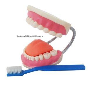 ฟันจำลอง พร้อมแปรง