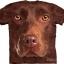 Big Face Brown Chocolate Labrador Dog Face T-Shirts thumbnail 1